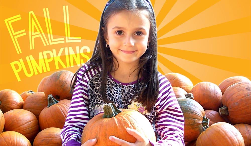 best pumpkin patch for kids brooklyn green meadows farm