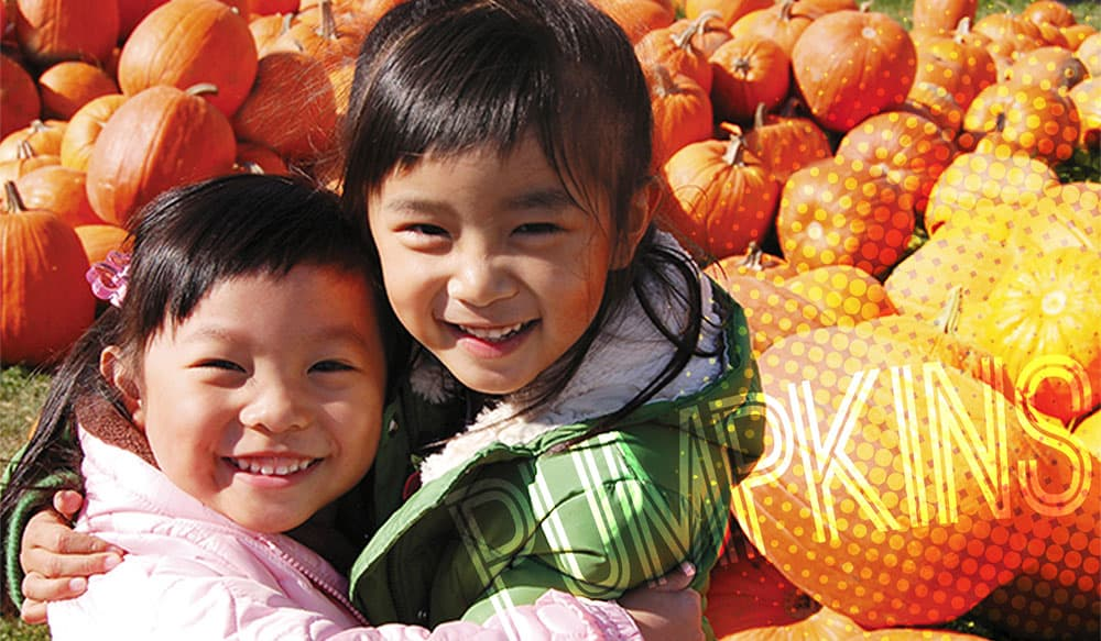 october fun pumpkin patch brooklyn ny